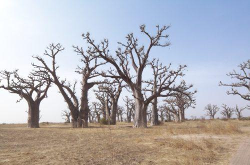Article : Le tourisme sénégalais se meurt